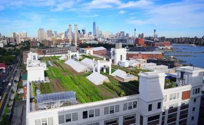 Brooklyn Grande - fazenda urbana