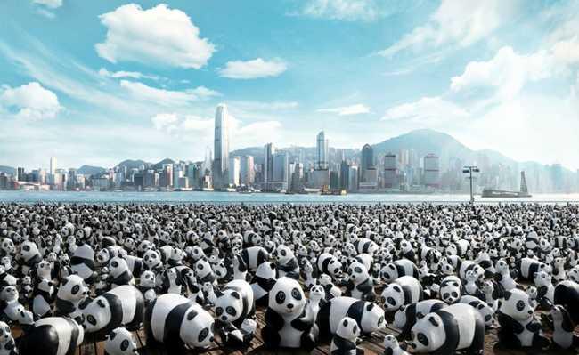 Sustentabilidade - Pandas na cidade - Paulo Grangeon