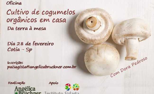 como cultivar cogumelos orgânicos