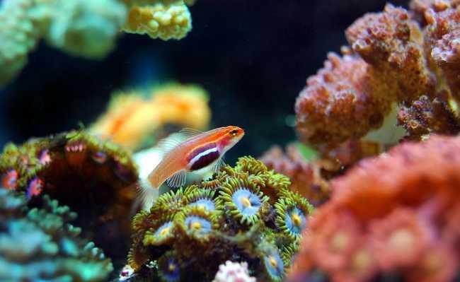 ONU alerta para questão dos corais