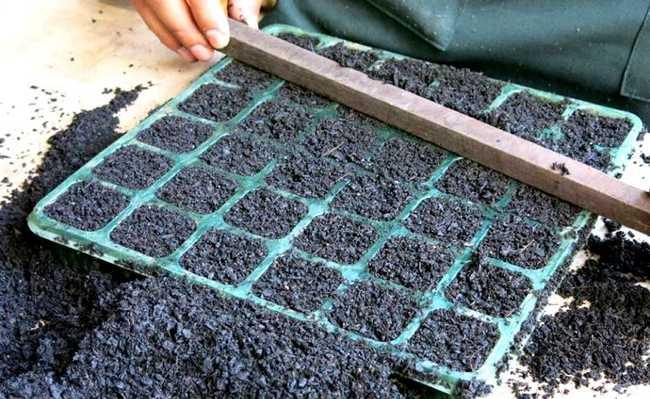 como montar sementeiras