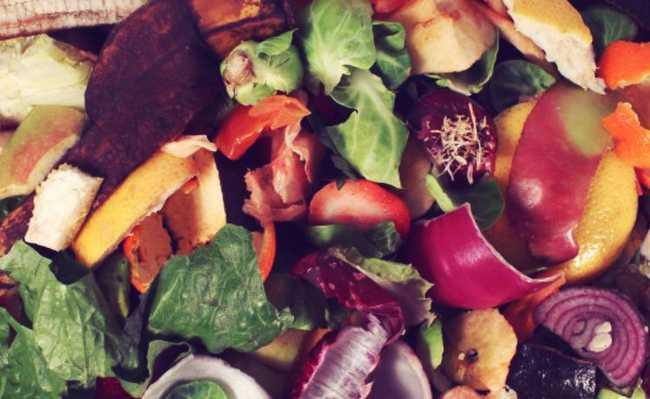 coleta seletiva lixo orgânico
