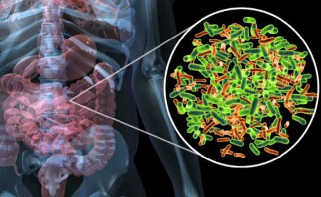Bactéricas causam doença autoimune