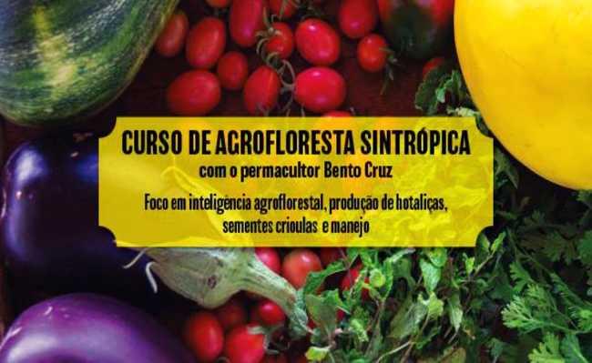 agricultura sintrópica para áreas degradadas