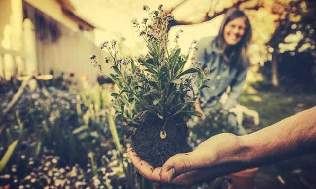 vida sustentável