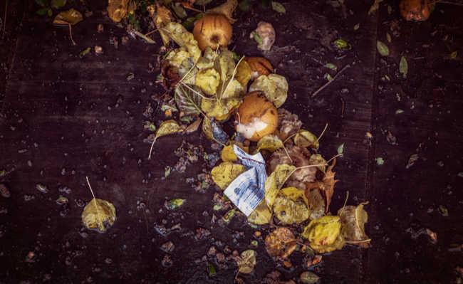 biodegradação