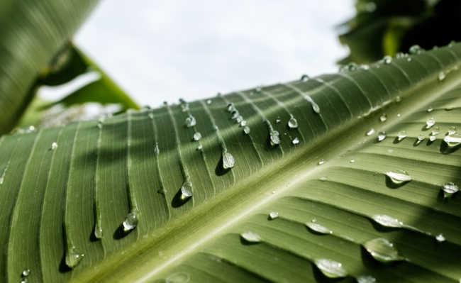 como filtrar agua da chuva