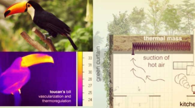 design, criação e inovação biomiméticos