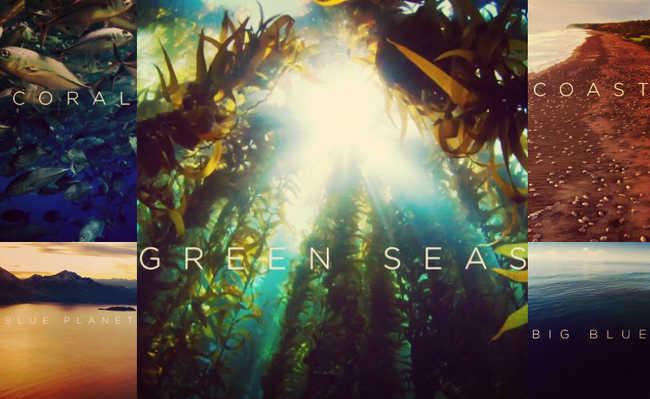 mostra gratuita sobre biodiversidade marinha