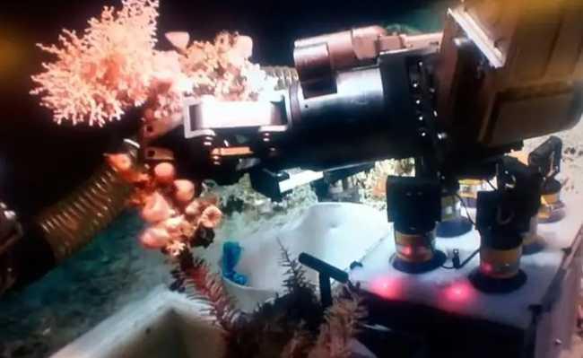 Estudo de corais no cânion