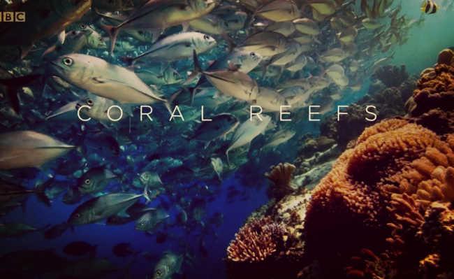 Episódio 3: Recifes de Coral