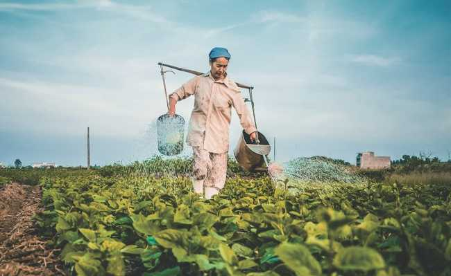 Plantação de alimentos