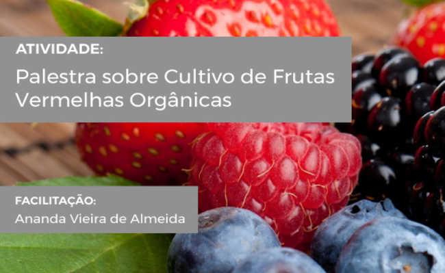 cultivo orgânico de frutas vermelhas
