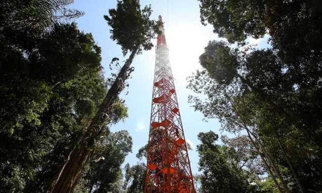 Torre alta da Amazônia