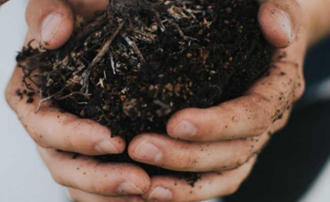 umidade composteira compostagem