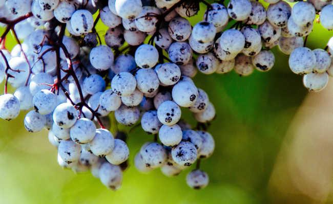 esfoliação com farinha de semente de uva