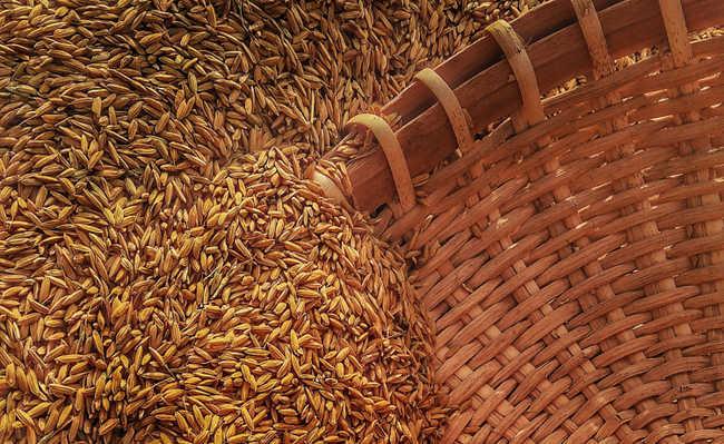 oleo de germen de trigo