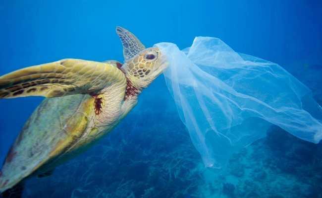 Tartaruga com lixo plástico