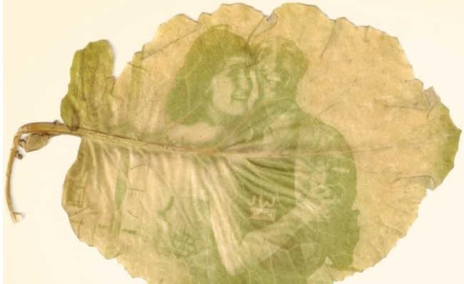 fotos nas folhas com antotipia