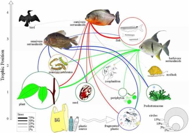 cadeia alimentar do plástico