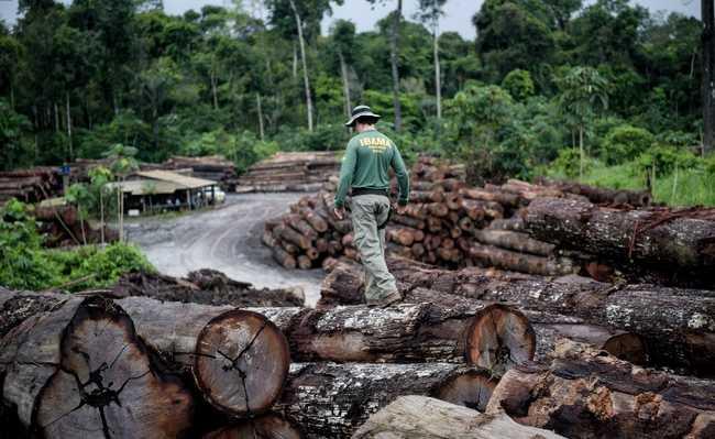 Aumento do desmatamento na Amazônia