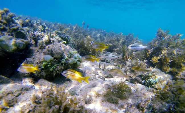 Vida marinha em Abrolhos