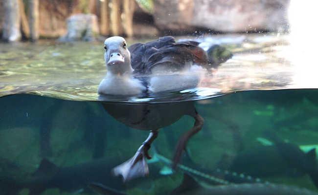 Flutuar sobre água