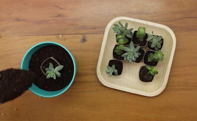 Plantando a sementeira
