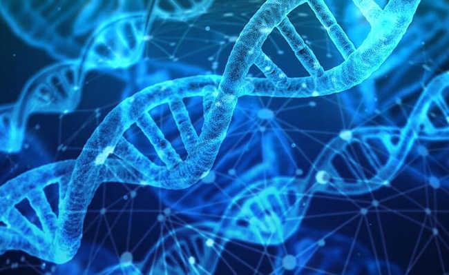 Cromossoma