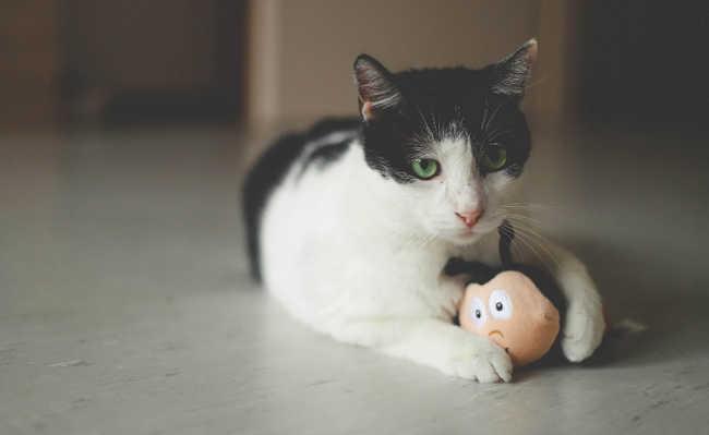 brinquedos para gato