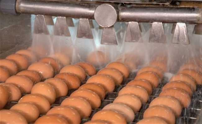 Biofilme para ovos