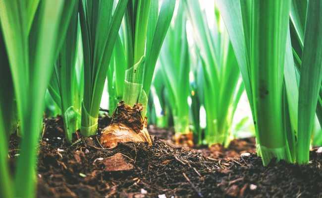 Como fazer adubo orgânico com resto de alimentos