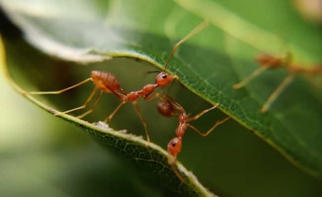 como acabar com formigas