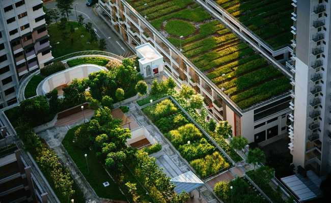 Fazenda urbana