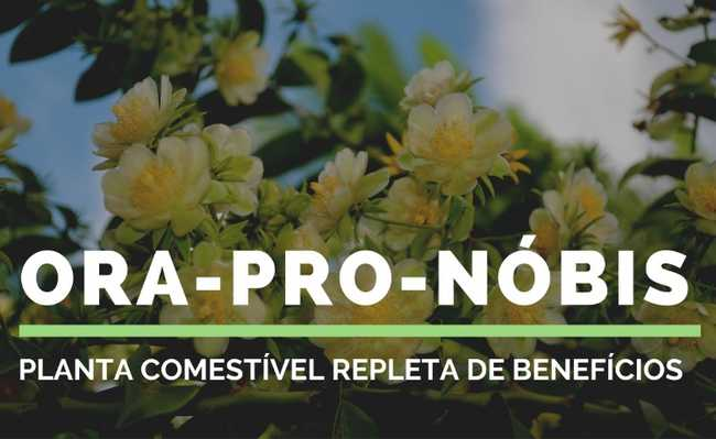 Ora-pro-nóbis