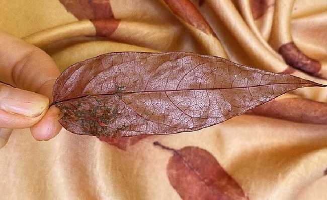 impressão botânica em têxteis