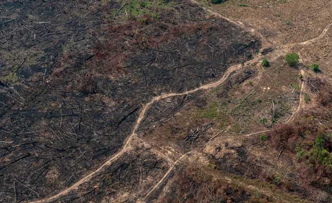 Desmatamento da Amazônia
