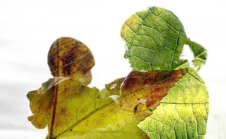 Economia sustentável: harmonia entre os humanos e a natureza