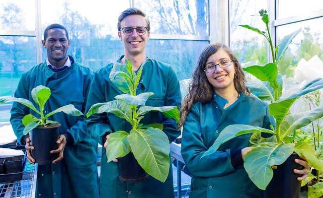 Crescimento de plantas
