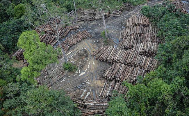 O que é desmatamento?