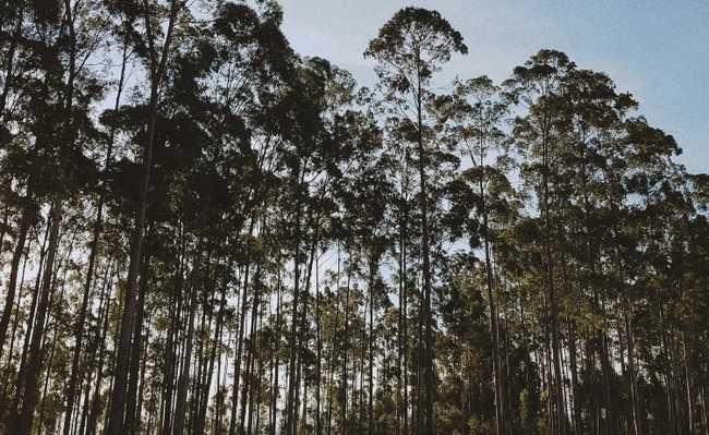 Mosaico florestal