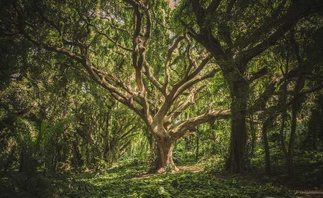 Importância da árvore