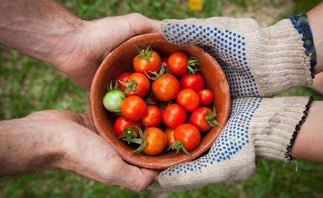 agricultura apoiada pela comunidade