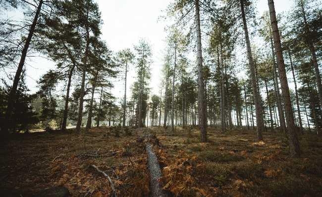 árvores florestas vida útil