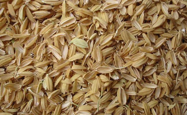 Cascas de arroz