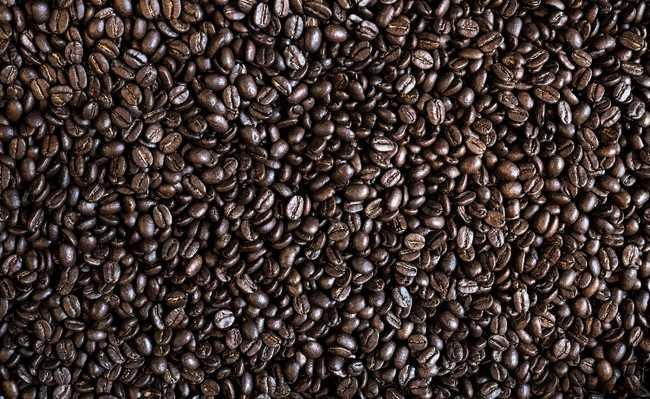 cultivo café gorongosa