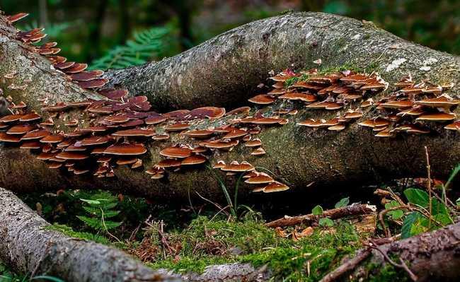 fungos árvores