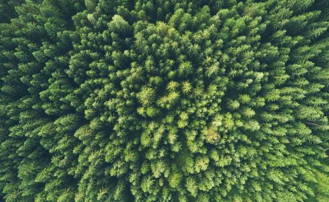 O que é meio ambiente?