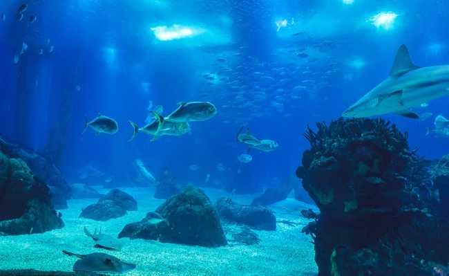 Mineração subaquática