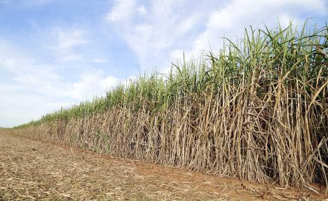 Zoneamento Agroecológico